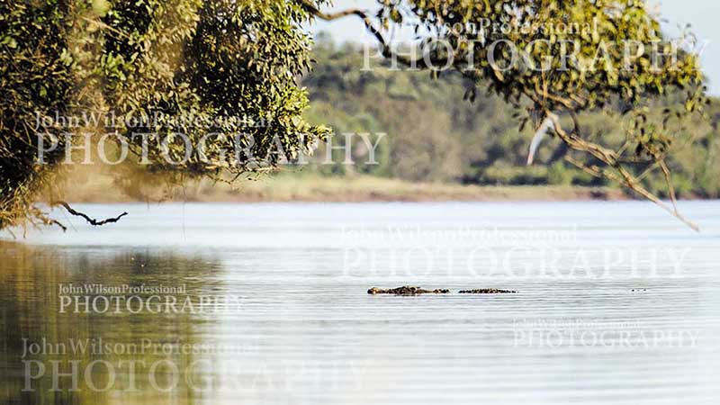 Mary River Croc01