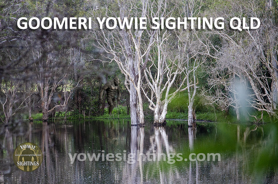 Goomeri Yowie Sighting QLD 2021