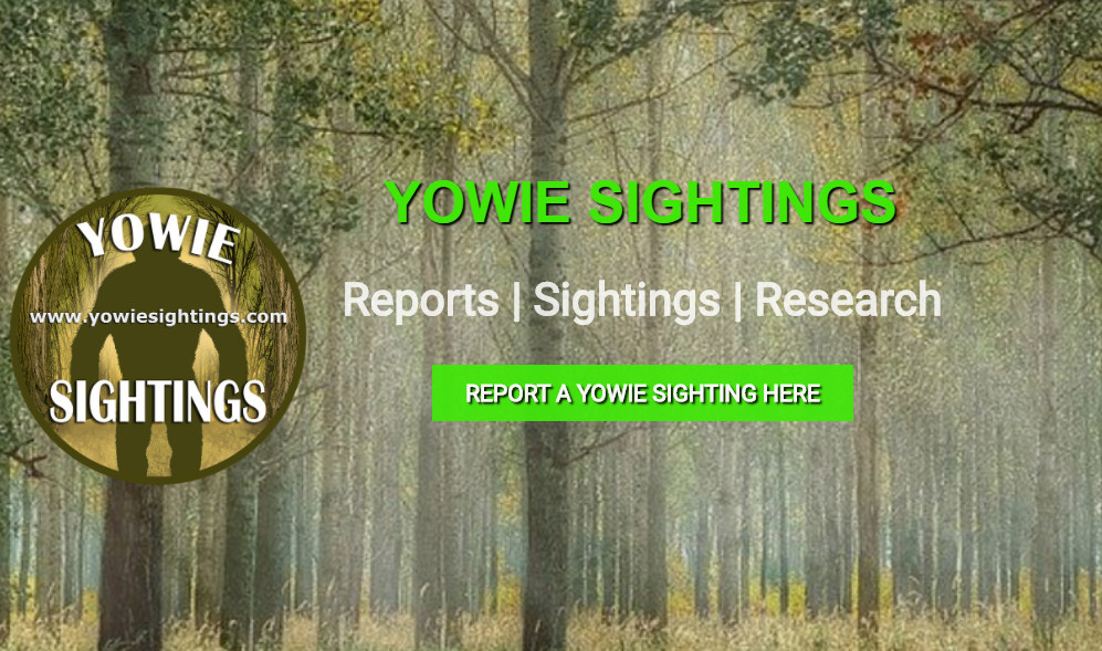 Yowie sightings QLD